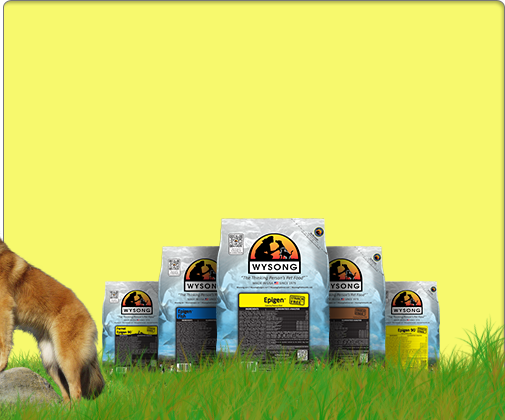 Best Rated Natural Dog Food